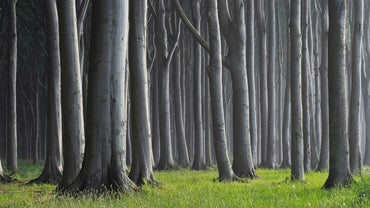 What Is a Group of Trees Called?