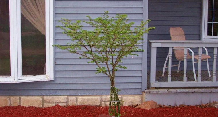 How Do You Grow a Dwarf Burning Bush?