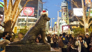 What Is a Hachiko Breed of Dog?