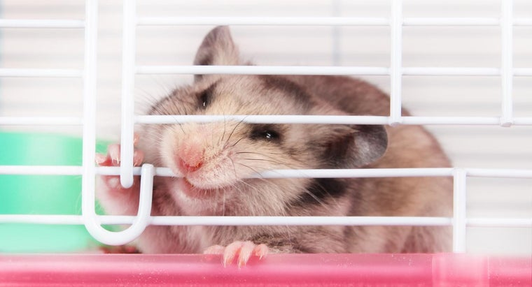 Are Hamster Bites Dangerous to People?