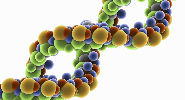 What Happens During DNA Replication?