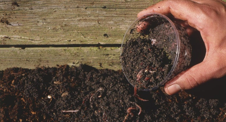 Does Having Worms in Soil Help Plants Grow Faster?