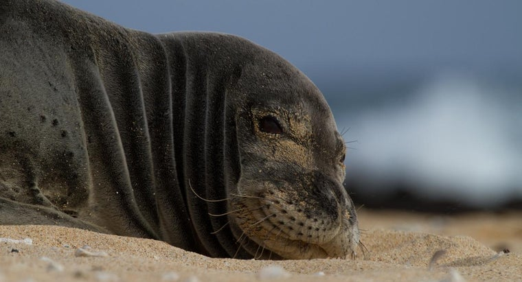 What Is Hawaii's State Animal?