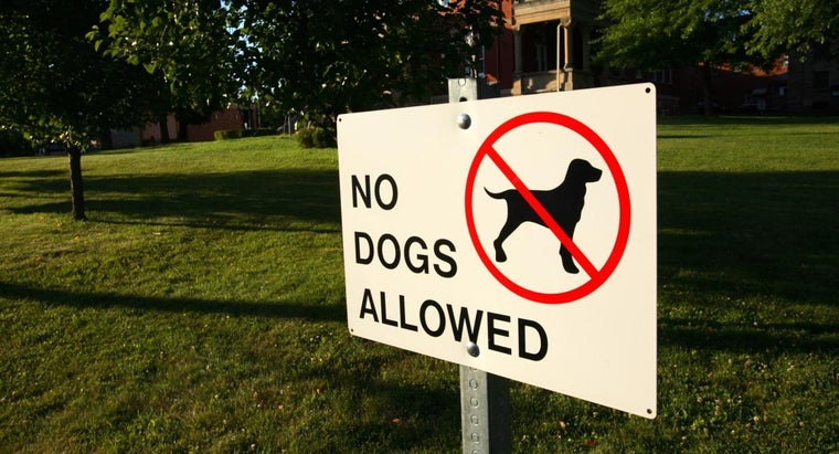 What Are Some Home Remedies for Keeping Dogs Off Your Lawn?
