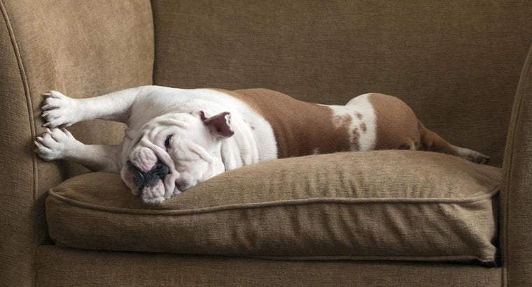 What Are Some Home Remedies for Removing Dog Urine Odors From Upholstery?