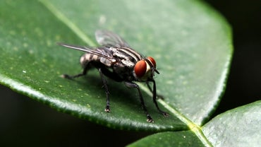 Where Do Houseflies Go During the Winter?