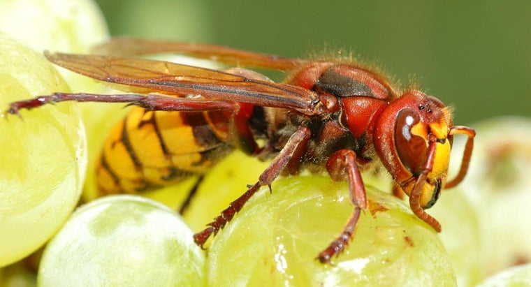 What Household Products Kill Wasps?