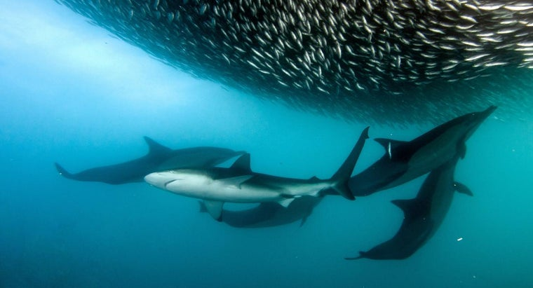 How Are Sharks and Dolphins Alike?