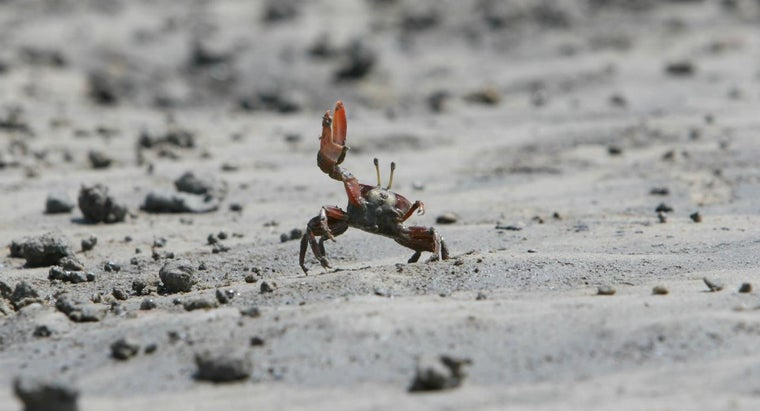 How Do Crabs Mate?