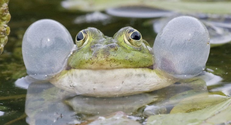 How Do Frogs Talk?