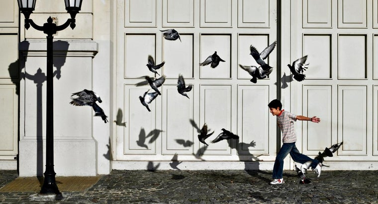 How Can You Get Rid of Pigeons?