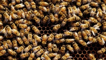 How Do I Keep Bees Out of My Yard?
