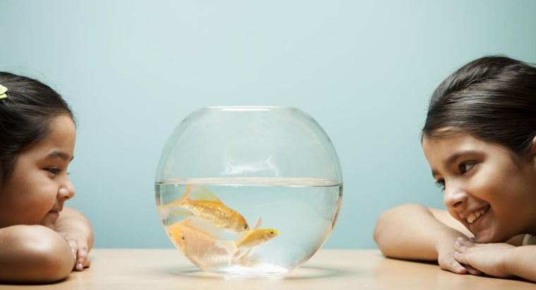 How Do I Know If My Goldfish Is Male or Female?