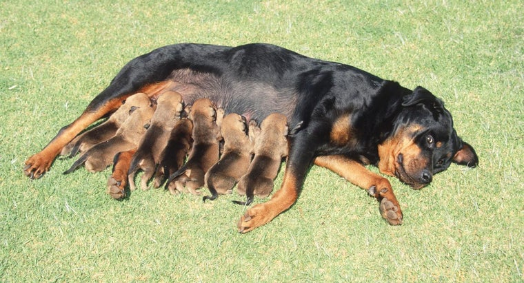How Do I Know When My Dog Is Ready to Give Birth?