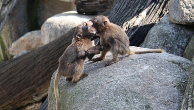How Do Monkeys Defend Themselves?