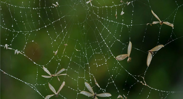 How Do Spiders Eat?