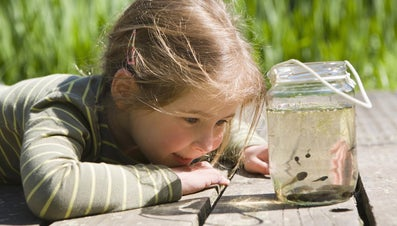 How Do Tadpoles Breathe?