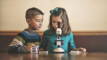 How Does a Light Microscope Work?