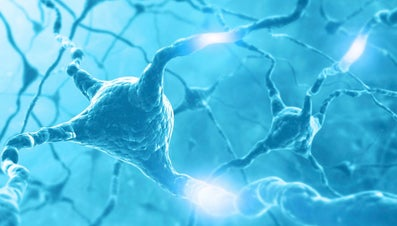 How Does the Nerve Impulse Travel Along the Neuron?