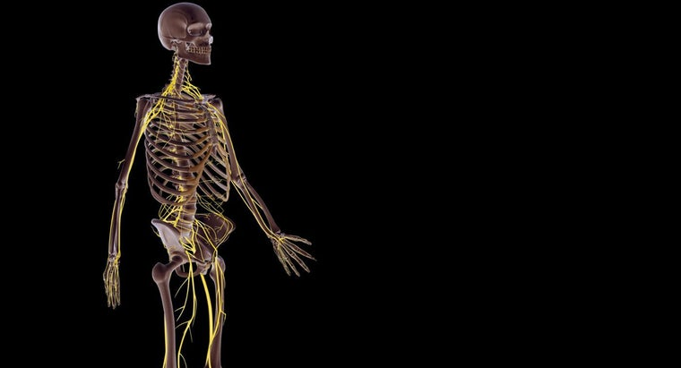 How Does The Nervous System Work With Other Body Systems