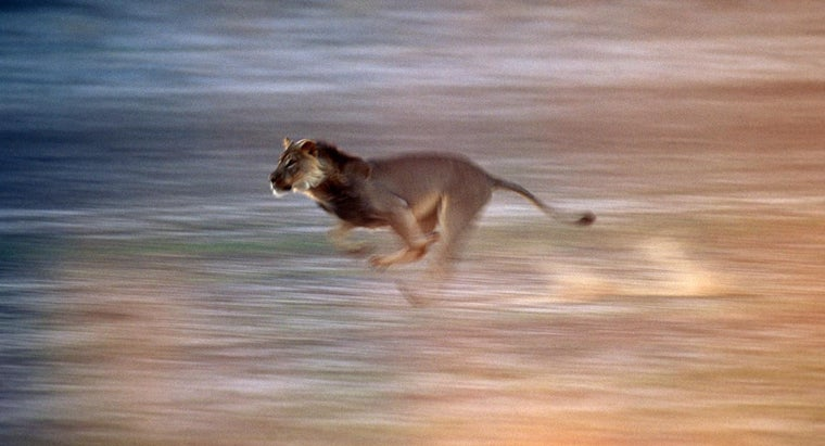 How Fast Can a Lion Run?