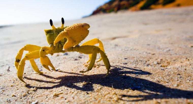 How Is a Crab Adapted to Life on the Seashore?