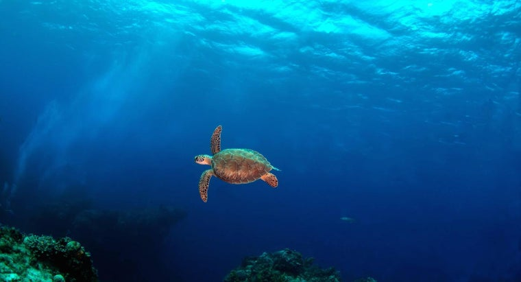 How Long Can a Turtle Stay Underwater?