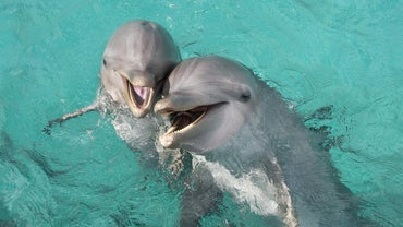How Long Do Bottlenose Dolphins Live?