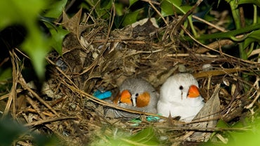 How Long Does It Take a Bird to Leave the Nest?