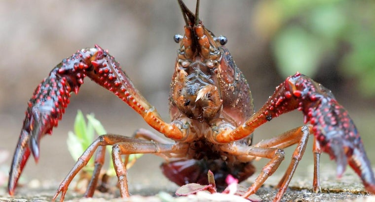 How Many Legs Do Crayfish Have?