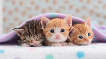 How Will I Know When My Cat Is Ready to Have Her Kittens?