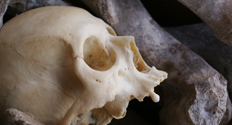 What Are Human Bones Made Of?