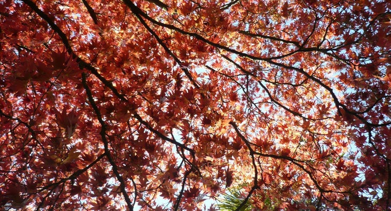 How Do You Identify Maple Tree Diseases?