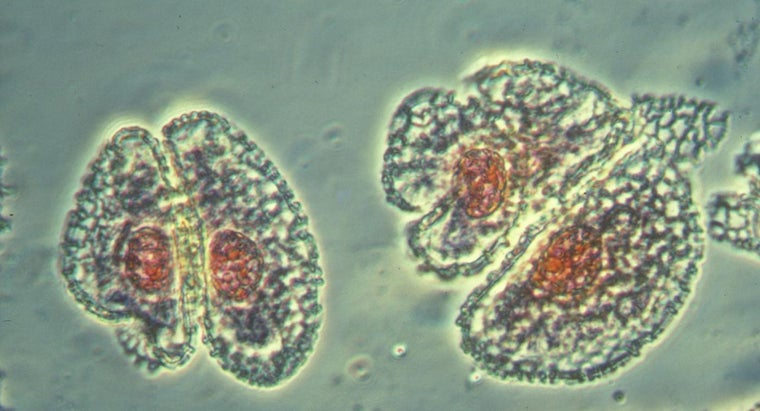 What Is the Importance of Meiosis?