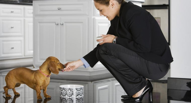 How Do You Increase Appetite in Dogs?