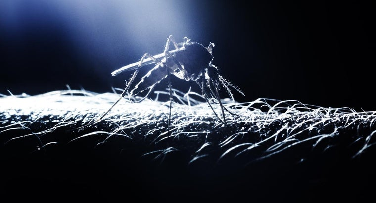 What Ingredients Are in Organic Mosquito Control?