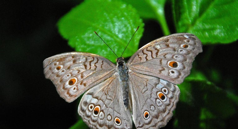 What Are Insect Feelers Called?