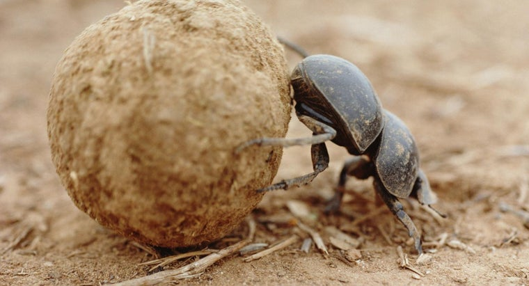 How Do Insects Excrete Waste?