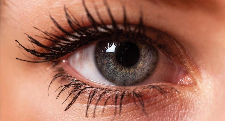 What Is the Inside Corner of Your Eye Called?