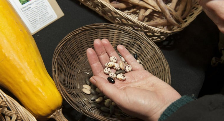 What Is Inside a Seed?