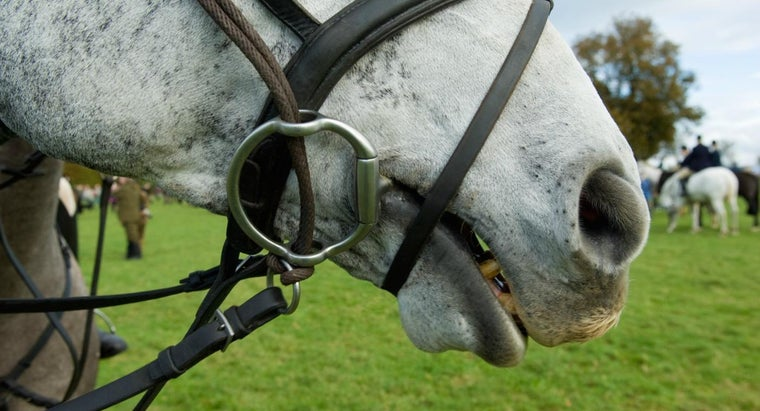 Who Invented the Bridle Bit?