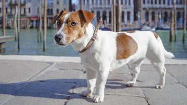 What Are Some Italian Dog Names?