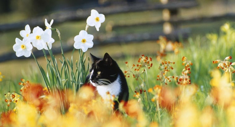 How Do I Keep Cats Out of My Garden?