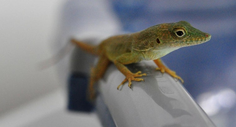 What Will Keep Lizards Away From a House?