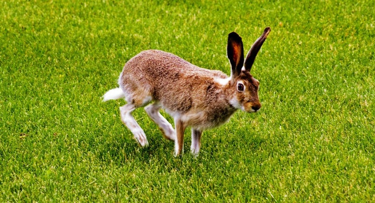 How Do I Keep Rabbits Off My Lawn?