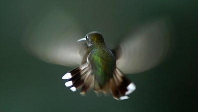 What Are Key Factors to Hummingbird Identification?