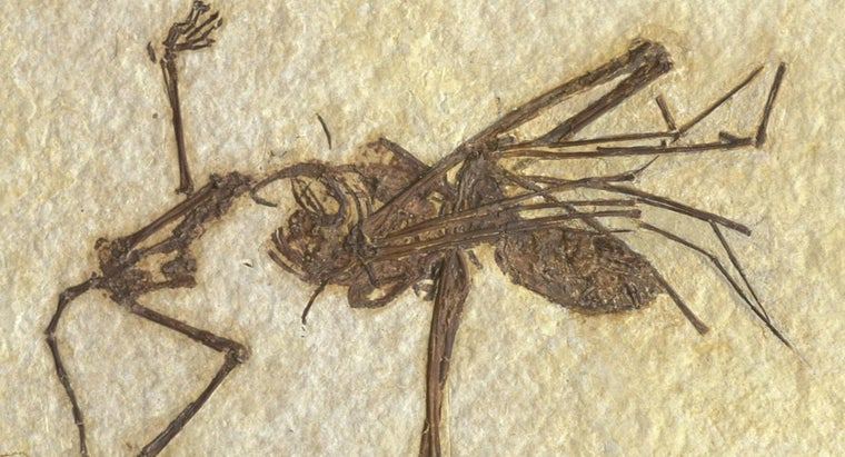 What Kind of Animals Are Most Likely to Be Fossilized?
