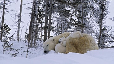 What Kind of Animals Live in Canada?