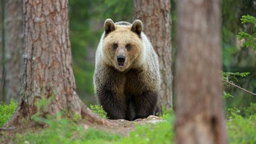 What Kind of Animals Live in the Taiga?