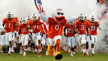 What Kind of Bird Is the Miami Hurricanes' Mascot?